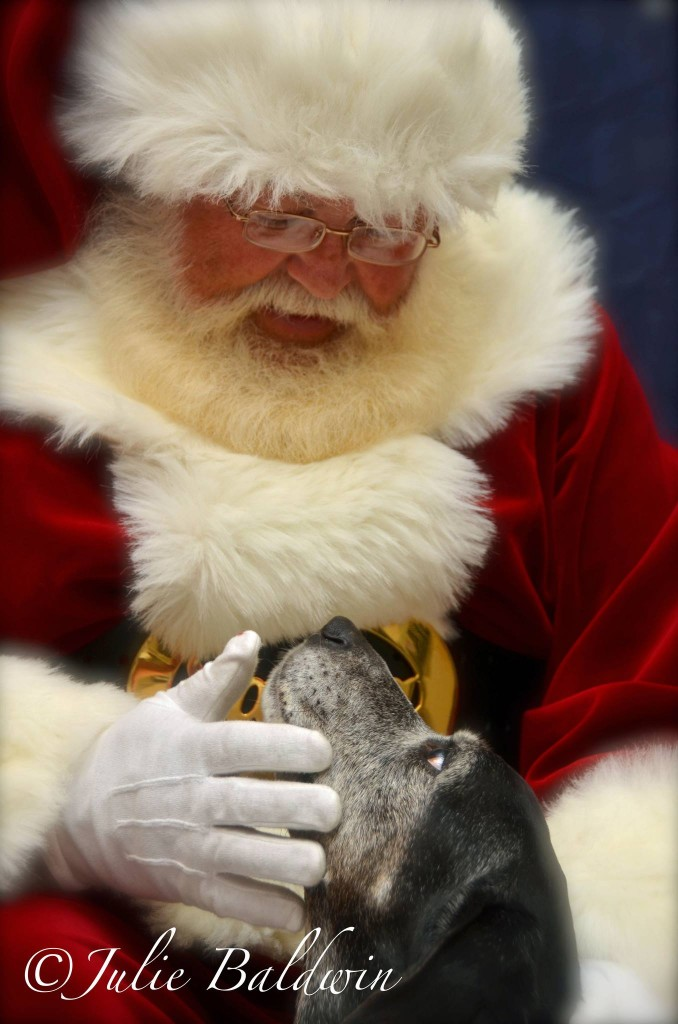 Old dog, old friend. Santa knows: dogs are a long-term commitment.