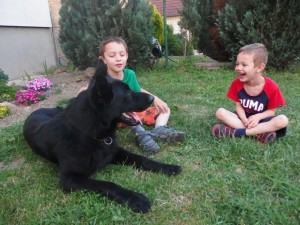 Conan 04 - German Shepherd Protection Dog for Sale