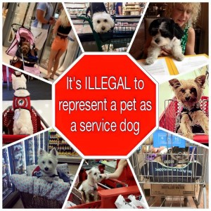 Fake Service Dogs - How to tell the difference